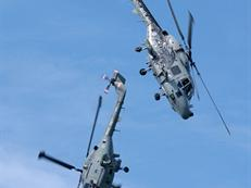 Two Lynx in aerial display