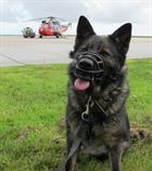 Police dog  and 771 NAS Sea King